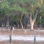 Moss Park Orlando ONHE